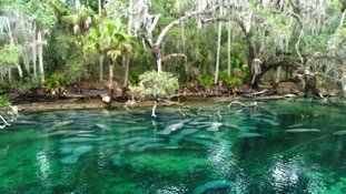 It's an easy drive to the Blue Springs from your InnHouse vacation home in Orlando.